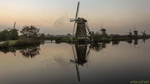 november nederland kinderdijk spreeuw spreeuwen wimzilver spreeuweninkinderdijk