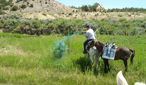 While working for the city of Worland for the Wyoming Game & Fish Department, Rory Karhu, currently a NRCS district conservationist in Park County, spearheaded tamarisk removal along the Gooseberry Creek, a tributary to the Big Horn River. NRCS photo.