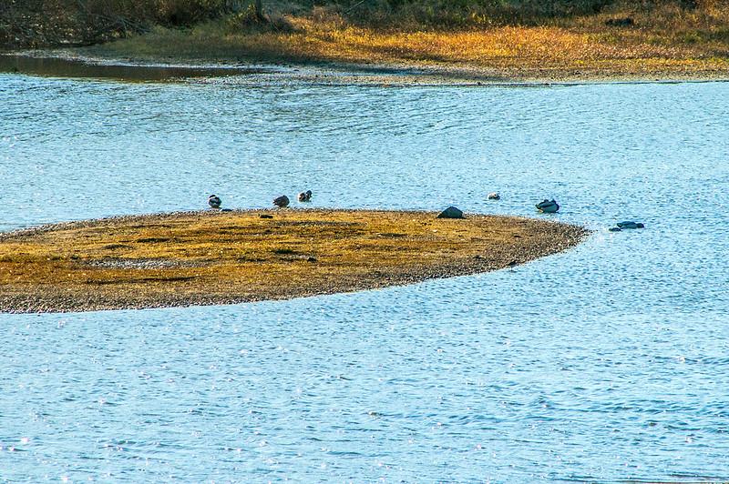 Atterbury Fish & Wildlife Area