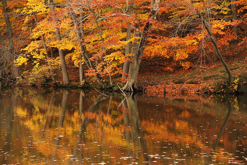 autumn usa fall america newjersey fallcolors autumncolours mountainside echolakepark