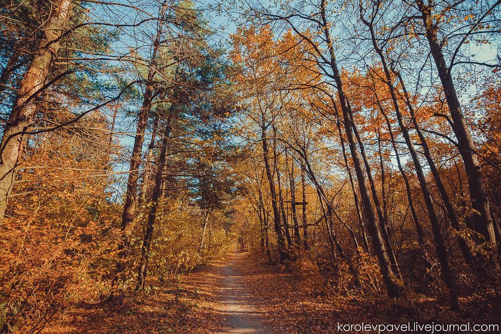 Autumn-045