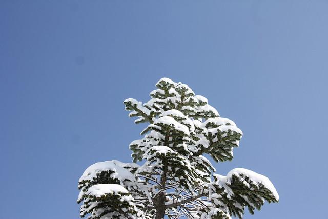 2014-03-09_00035_北横岳