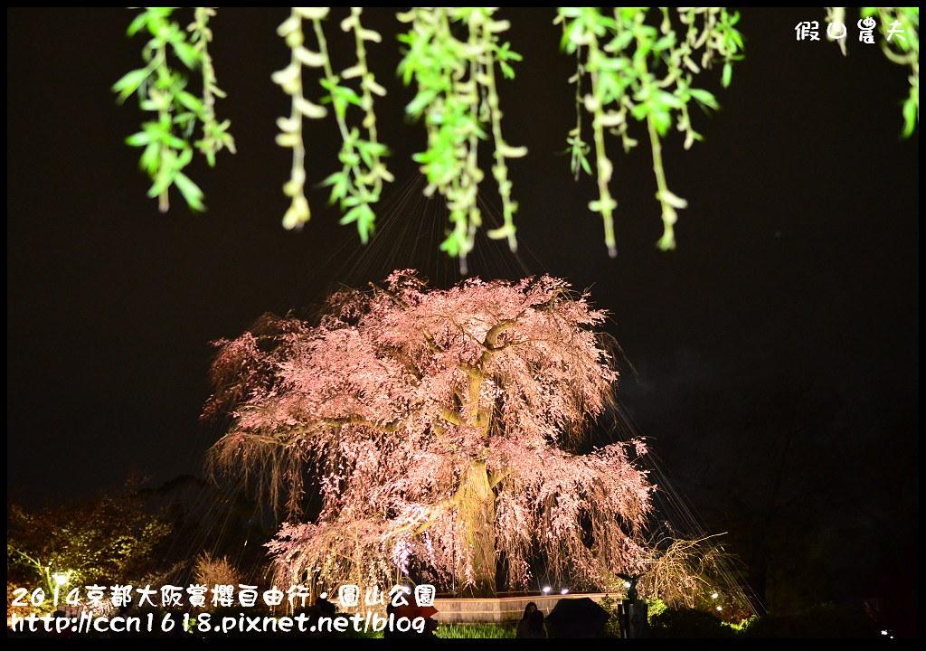 2014京都大阪賞櫻自由行.圓山公園DSC_0704