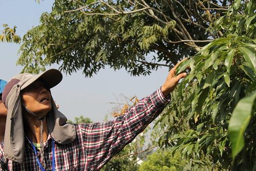 佩雲無藏地分享自己實施自然農法的經驗。