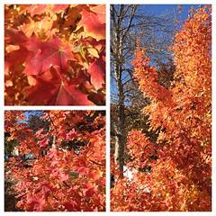 #orange #autumn #color