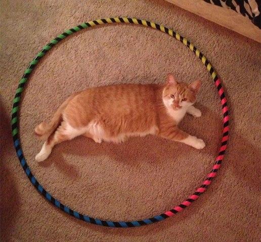 3 bước để bẫy 1 con mèo