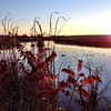 Oct 23 - 'w' is for wetland {my favourite photo spot on the way to work at sunrise} #fmsphotoaday #wetland #marsh #princeedwardcounty #sunrise #autumn