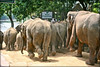 Elephant encounter