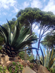 aloe, tree, plant, flora, agave azul, vegetation,
