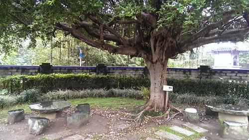 虎皮鸚鵡小雪葬至中和靈骨塔園區內大榕樹下
