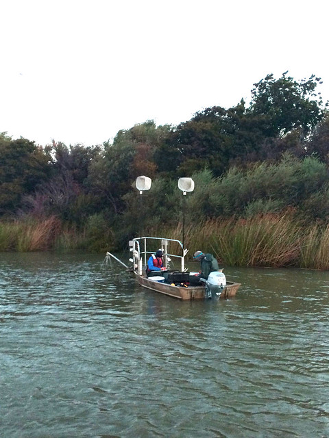 Do non native fish have a place in the sacramento delta for San joaquin river fishing