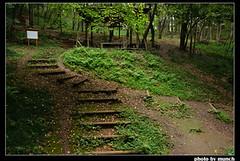森林裡的小廣場。圖片來源:munch