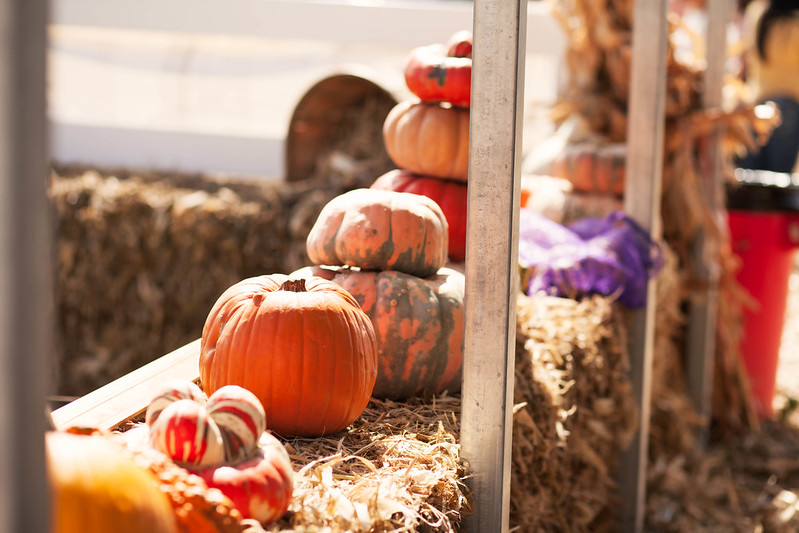 cute & little blog | petite fashion | storybook ranch fall pumpkin patch | dallas mckinney