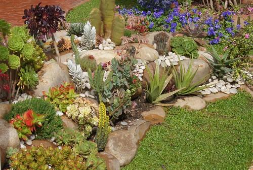 Интереснейшая клумба из суккулентных растений