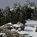 Pauvre cerf dans la neige haute