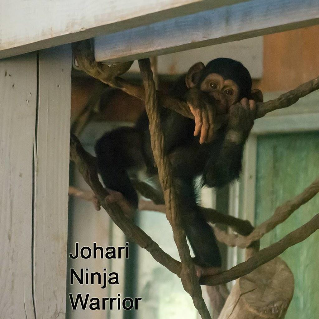 Johari Ninja Warrior