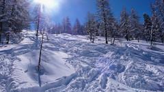 Zjazd lasem od schroniska Rif. F. Chabod 2750m. po opadach śniegu.