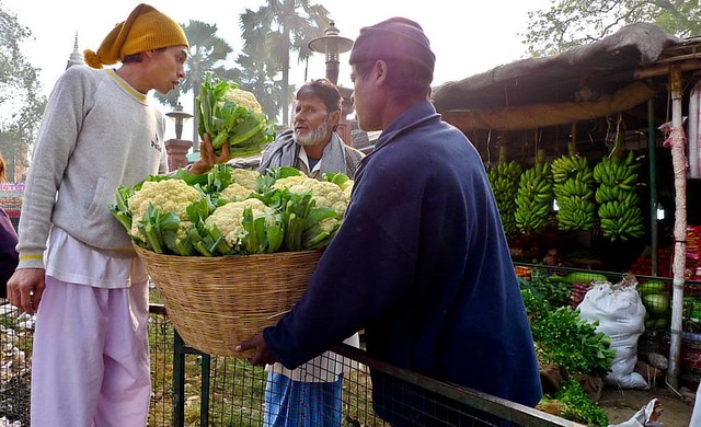 Gaya India: December 31, 2008