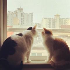 Sharing the window seat.