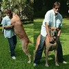 Amitabh Bachchan playing with his Dog :dog:! He is Huge, would you keep a dog like that at your home. #Bollywood :heart_eyes::heart_eyes::heart_eyes: