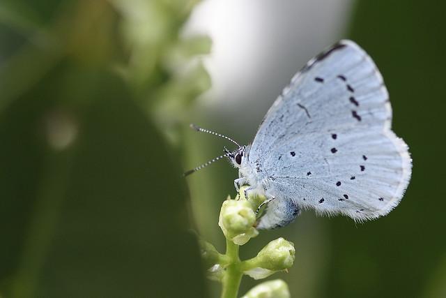 Vlinder, Butterfly.
