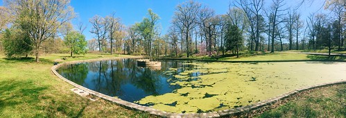 bryanpark pond algae richmond virginia panorama
