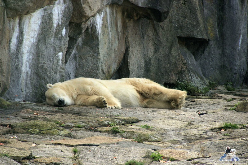 Berliner Zoo 64
