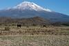 2014/365/292 Mooing Around Mt Shasta