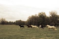 Zushman Farm 2014 (333 of 507).jpg
