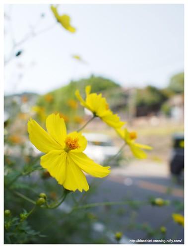 Onomichi view #42