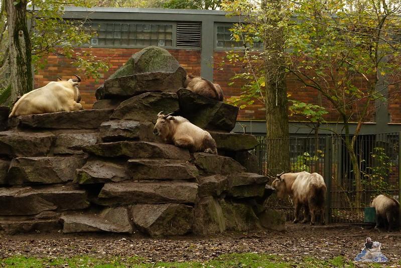 Tierpark Berlin 26.10.2014 165
