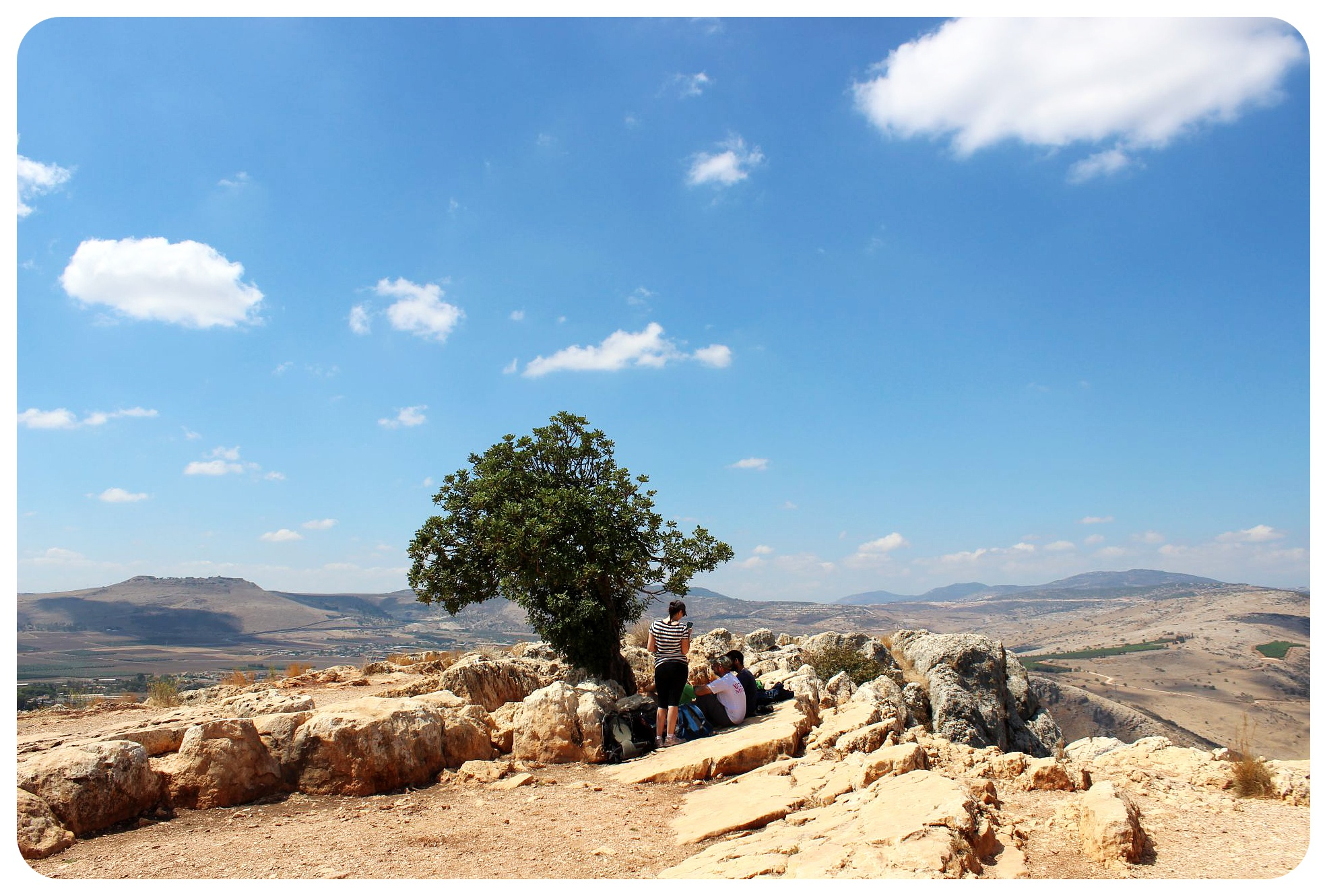 mount arbel tree