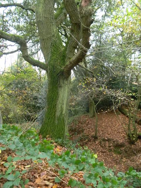 Tree, dip 'n' leaves