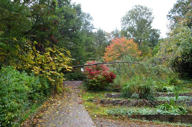pine tree down on driveway