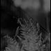 untitled/strange/untitled