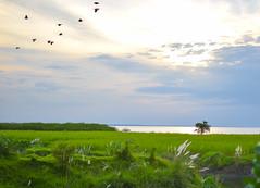 Sunset over the river Padma, Bangladesh