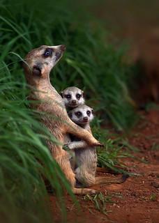 animal family003