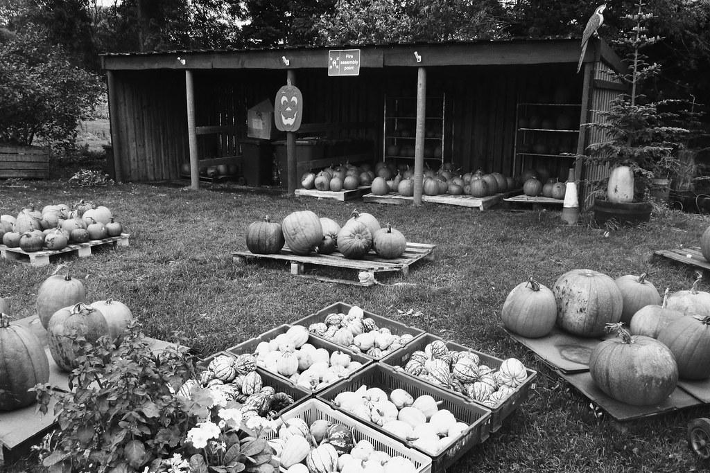 Charleton fruit farm Halloween 5