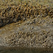 Low Tide Mud