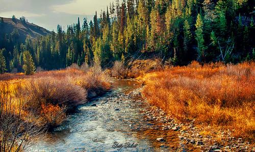 creek idaho mccoy