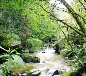 Bioma Mata Tropical Atlântica. com vídeo