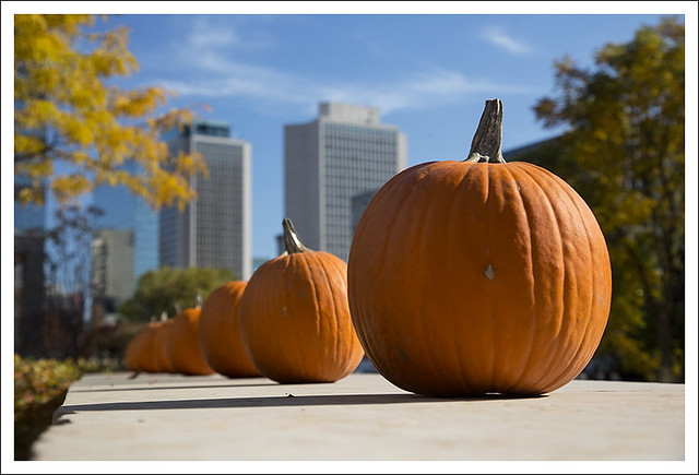 Pumpkins In Citygarden 2014-10-25 1