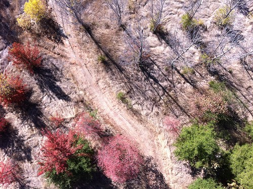 Fall Colors from Overhead