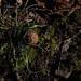 moss, Shenandoah National Park, jdy326 XX201211213473.jpg