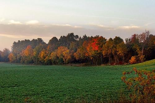 autumn trees field sunrise foggy ilobsterit