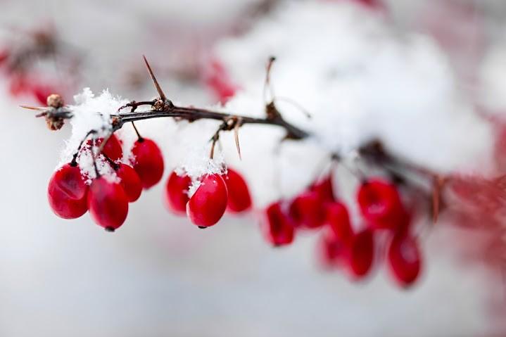 【跟著節氣學養生】霜降:秋轉冬初,滋補與舒緩