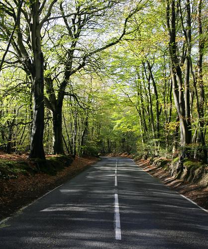 Woodland B Road