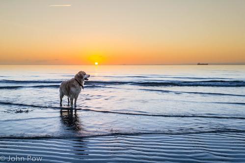morning sea dog pets sun beach scotland early surf unitedkingdom rise kirkcaldy