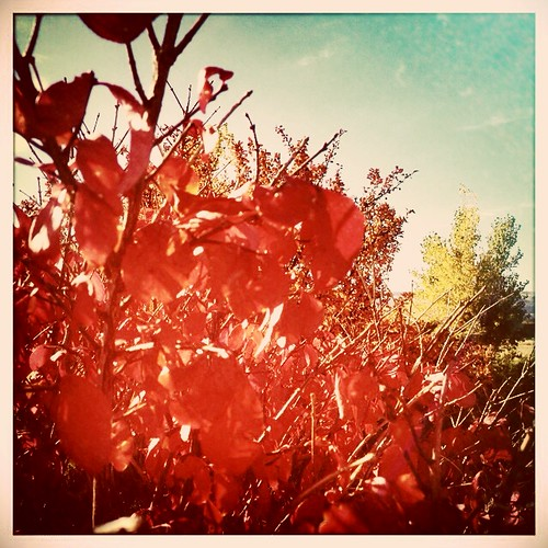 Fall fire.