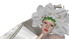 白い花の冠